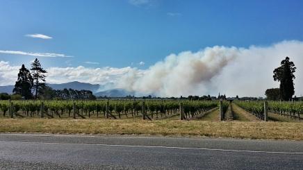 Blenheim vinyard blaze