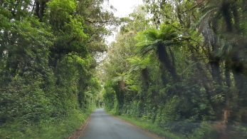 Mt Taranaki bush